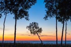Geneigtes ree bei Sonnenuntergang Stockfotos