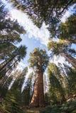 Generała Sherman Drzewo Sekwoja park narodowy zdjęcie stock