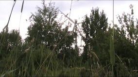 Generador de viento almacen de metraje de vídeo