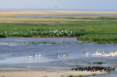 General aerial view of Manych lake with lots of birds Stock Photography