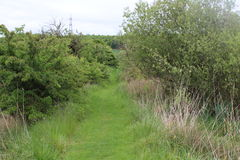 General footpath Treeton. Footpath Treeton Rotherham.  Generic vegitation Royalty Free Stock Image
