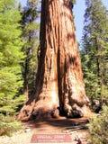 General Grant Sequoia Tree, Nationalpark König-Canyon lizenzfreie stockbilder