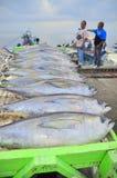 General Santos, Filipinas - 5 de septiembre de 2015: El atún está siendo Fotografía de archivo libre de regalías