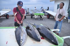 General Santos, Philippines - September 5, 2015: An expert is ch. Ecking the quality of tuna at the dock Royalty Free Stock Photo