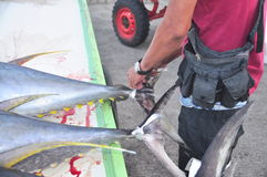 General Santos, Philippines - September 5, 2015: A fisherman is. Marking his tuna at the seaport Royalty Free Stock Photo
