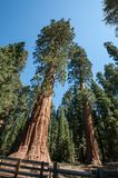 General Sherman Royaltyfria Foton
