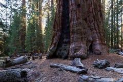 General Sherman in Sequoia NP Stock Image