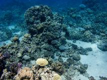 General underwater view of Read Sea near Dahab royalty free stock images