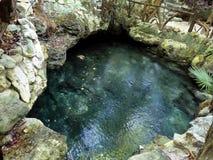 General view of cenote near Chichen Itza, Mexico Stock Photo
