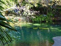 General view of cenote near Chichen Itza, Mexico Stock Photography
