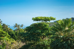 General view of the jungle Phuket Royalty Free Stock Photography