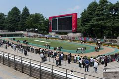Parade Ring at Tokyo Racecourse, Japan. General view of the Parade Ring at Tokyo Racecourse, Fuchu, Tokyo, Japan Royalty Free Stock Photos