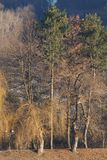 General view of the trees near the resort lake in January in the. Foothill park of the Caucasus with growing coniferous trees and willow, Nalchik, Kabardino royalty free stock photos