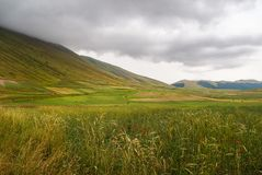 General view of the valley, Castelluccio di Norcia, in Umbria, Italy. Fields and hills, with red poppies in foreground. General view of the valley, Castelluccio royalty free stock photo