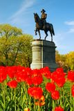 General Washington In The Tulips Royalty Free Stock Photos