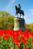 General Washington nas tulipas fotos de stock royalty free
