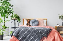 Generale modellato sul letto rosso con i cuscini nell'interno grigio della camera da letto con le piante immagine stock