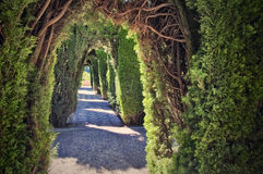 Generalife garden in Granada, Spain. A tunnel in a hedge, in Generalife gardens (part of the Alhambra in Granada, Spain Stock Photos