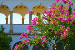 Generalife Gardens in bloom. Royalty Free Stock Photo