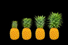 Generation of pineapple tree stock photography