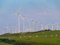 Generatore eolico ed uccelli Fotografia Stock Libera da Diritti