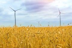 Generatore eolico fra le orecchie dorate dei raccolti di grano Fotografia Stock