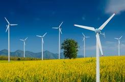 Generatore eolico per energia alternativa nel giacimento di fiori giallo di Crotalaria con i pali di potere Immagine Stock