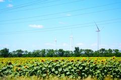 Generatori eolici Dobrudja, Bulgaria del giacimento dei girasoli Fotografia Stock Libera da Diritti