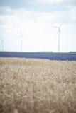 Generatori eolici e grano Fotografia Stock Libera da Diritti