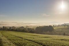 Generatori eolici rurali della collina della foresta degli alberi di mattina della foschia della nebbia del paesaggio fotografie stock