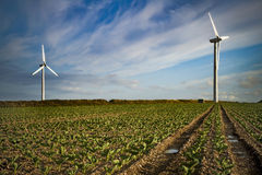 Generatori eolici su terreno coltivabile alla luce solare di prima serata Immagini Stock Libere da Diritti