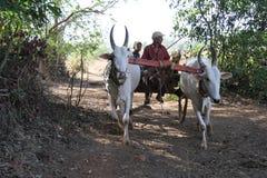 Generazione dell'agricoltore Immagini Stock Libere da Diritti