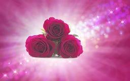 Generazione delle rose di domenica per la vostra mummia speciale Fotografia Stock Libera da Diritti