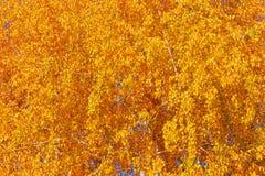 genere di alberi come fondo continuo di struttura della foglia fotografia stock