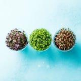 Genere differente dell'insalata del crescione Fotografia Stock Libera da Diritti