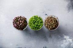 Genere differente dell'insalata del crescione Immagine Stock Libera da Diritti