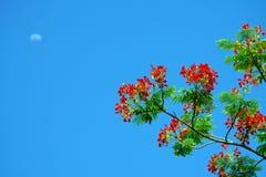 Genere fiore dell'aloe Immagini Stock