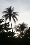 In genere tropicale Immagini Stock