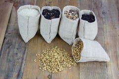 Generi di Drifferent di riso Fotografie Stock Libere da Diritti
