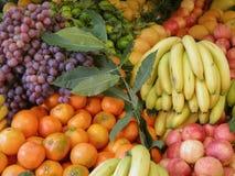 Generi differenti della frutta fotografia stock libera da diritti