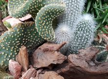 Generi differenti di cactus piani, oblunghi e curvi immagine stock