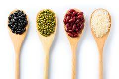 Generi differenti di fagioli Immagini Stock