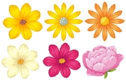 Generi differenti di fiori nel giallo e nel rosa illustrazione vettoriale
