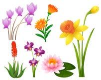 Generi differenti di fiori tropicali Fotografia Stock
