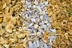 Generi differenti di funghi Fotografie Stock Libere da Diritti