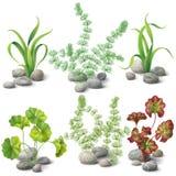Generi differenti di insieme delle alghe illustrazione di stock