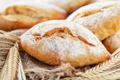 Generi differenti di pane fresco sulla tavola di legno Assortimento isolato di pane su fondo marrone fotografia stock libera da diritti