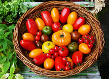Generi differenti di pomodori Fotografia Stock