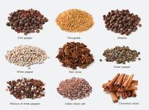 Generi differenti di spezie su fondo bianco fotografia stock