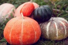 Generi differenti di zucche su un fondo dell'erba Harves di autunno fotografie stock
